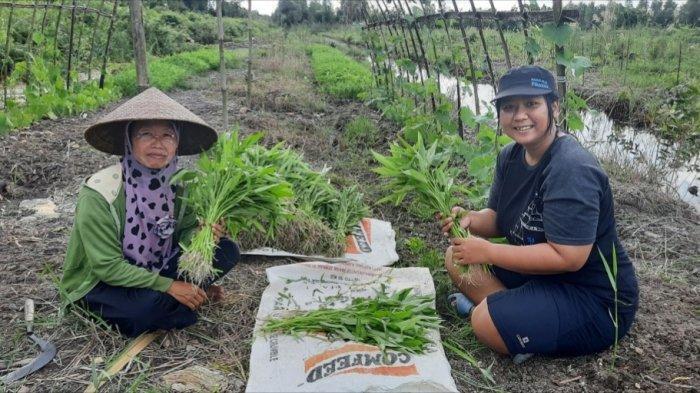 Dorong Ketahanan Pangan, Warga Pedesaan Gambut Budidayakan Sayuran