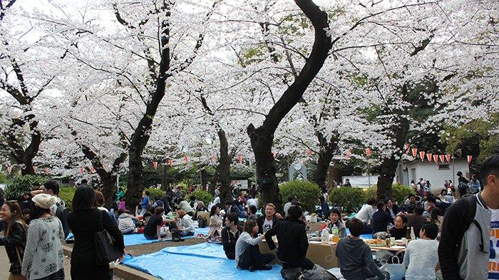 Masyarakat Jepang ber-hanami di taman Ueno di Tokyo serta papan larangan bagi pengunjung (kanan).