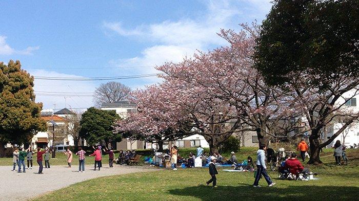 Warga Jepang berhanami di sebuah taman di Tokyo sambil menari, minum-minum dan bersenda gurau bersama teman dan keluarga.