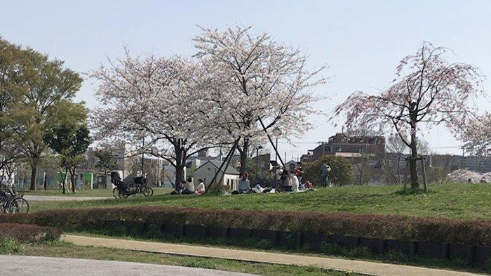 Hanami di Jepang Langgar Aturan, Kasus Covid-19 di Tokyo Meningkat Lagi Jadi 430 Orang Per Hari