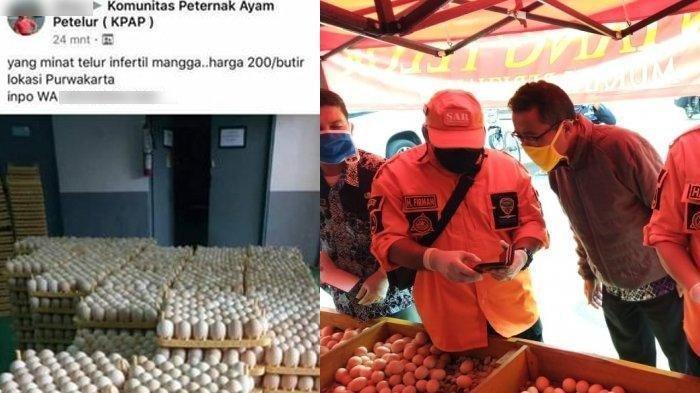 Waspada, Telur Infertil Sempat Ditemukan di Pasaran, Ini Ciri-ciri Telur yang Bahaya Dikonsumsi Itu