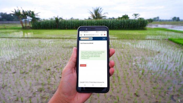 Klik eform.bri.co.id/bpum untuk Cek Bantuan UMKM Rp 2,4 Juta, Berikut Panduannya