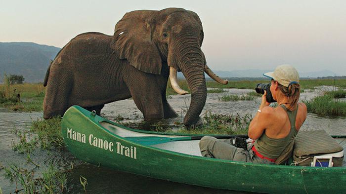 Wisata Safari di Tempat Ini Harganya Ratusan Juta Rupiah, Tawarkan Beragam Fasilitas Menarik