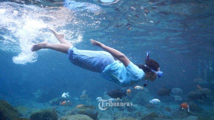 Pengunjung menikmati keindahan bawah air di wisata Umbul Ponggok, Desa Ponggok, Kecamatan Polanharjo, Kabupaten Klaten, Jateng, Sabtu (7/2/2015). Tempat wisata yang baru ini menyimpan keindahan bawah air yang berisi fauna-fauna air tawar.