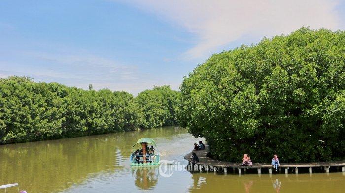 Bantah Adanya Peningkatan Kerusakan Hutan, KLHK: Deforestasi Indonesia Turun 75 Persen