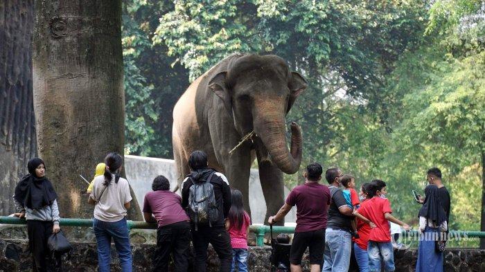 Lonjakan Kasus Covid-19, Kebun Binatang Ragunan Tutup Sampai Waktu yang Belum Ditentukan