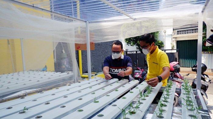 Bangun Instalasi Hidroponik di 17 Kota, Berdayakan Warga Terdampak Pandemi