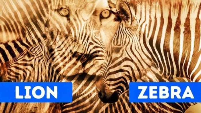Gambar 1. Singa atau zebra?