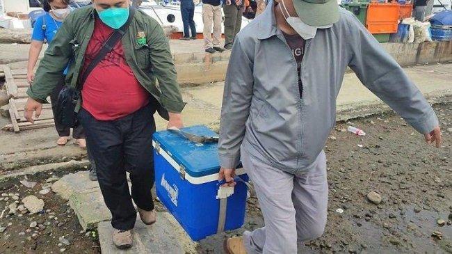 Kontaminasi Paracetamol di Teluk Jakarta Perlu Penelitian Lebih Lanjut
