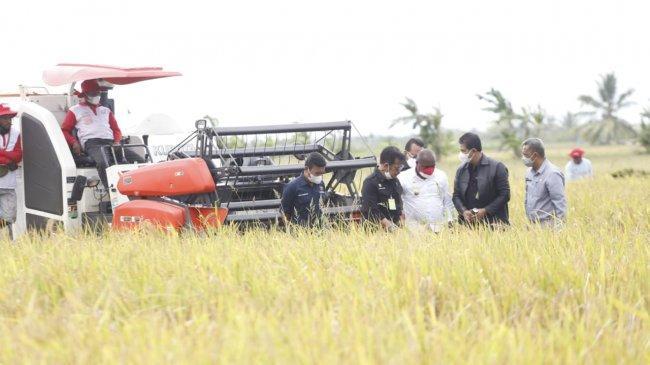 Akademisi IPB Beber Produksi Beras 2018 Hingga 2021 Naik, Kinerja Pertanian Memuaskan