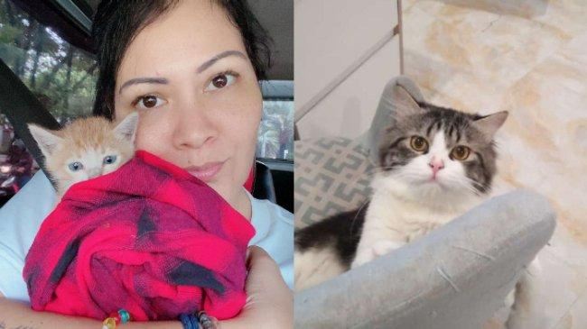 Viral Perburuan Kucing di Medan, Melanie Subono Akui Sudah DM Pemilik Kucing Tayo