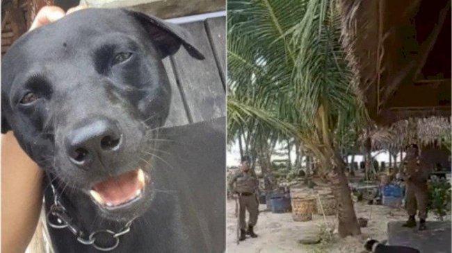 Anjing Mati Usai Ditangkap Satpol PP Viral, Kepala Satpol PP Aceh Singkil Ungkap Duduk Persoalannya