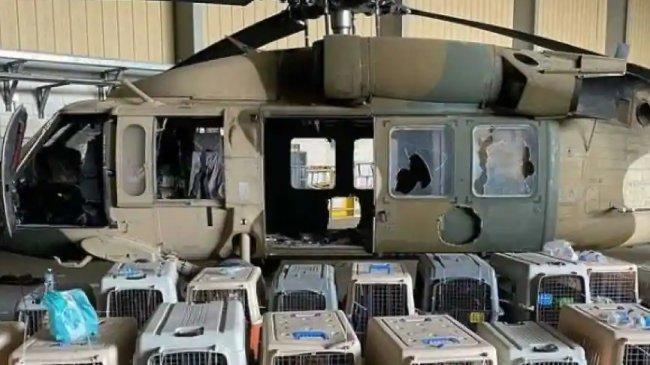 Nggak Cuma Peralatan Perang, Anjing-anjing Piaraan Tentara AS Juga Ditinggal di Kabul