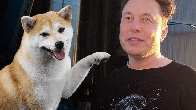 Koin Shiba Inu Melonjak 30 Persen Usai Cuitan Elon Musk Pamer Foto Diri Bareng Anjing 'Floki'