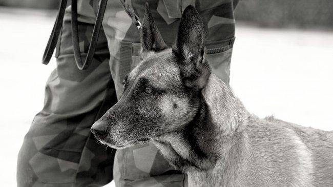 VIRAL Kabar Amerika Serikat Tinggalkan Anjing-anjing Militer di Afghanistan, Pentagon Membantah