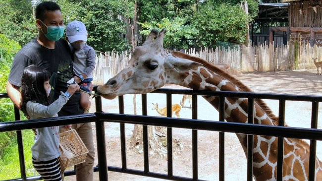 PPKM Darurat Digelar, Kebun Binatang Bandung Darurat Pakan