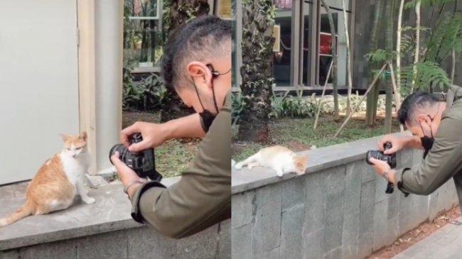 VIRAL Pemuda Punya Hobi Memotret Kucing Liar, Merasa Puas dengan Hasil Foto, Begini Kisah Lengkapnya