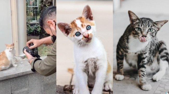 Viral Kisah Pemuda Hobi Memotret dan Beri Makan Kucing Jalanan, Berikut Foto-foto Hasil Jepretannya