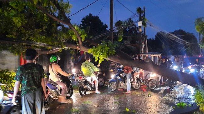 Imbas Pohon Tumbang di Sekitar Stasiun Depok, KRL Tertahan Satu Jam di Stasiun UI