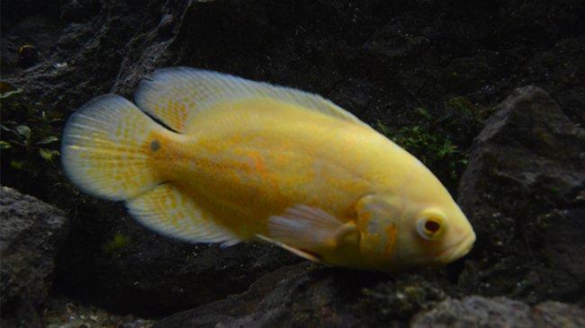Unik, 3 Ikan Ini Punya Corak Batik Lho! Semuanya Bisa Ditemukan di Indonesia!