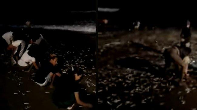 Begini Penjelasan BMKG Soal Video Ikan Terdampar di Pantai yang Dikaitkan dengan Gempa di Bali