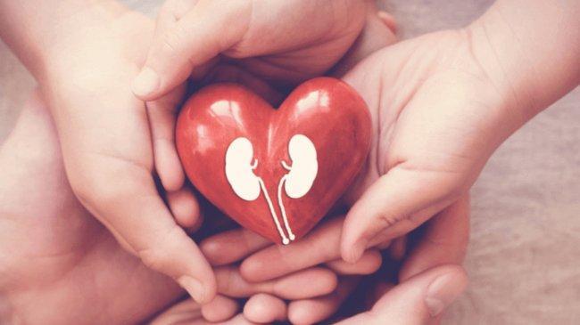 Pengertian Sistem Ekskresi Manusia, Organ Ekskresi dan Jenis Gangguan Kesehatan pada Organ Ekskresi