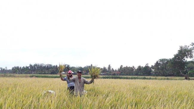 Kementan Ajak Pangkep Manfaatkan KUR untuk Kembangkan Pertanian