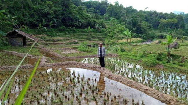 Kementan Sarankan Petani Bali Ikut AUTP, Dapat Pertanggungan Ketika Gagal Panen