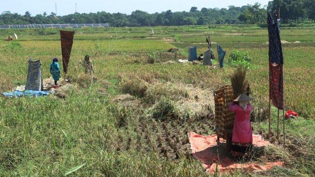 Kementan: Sektor Pertanian Tak Pernah Terganggu Krisis, Tetap Tumbuh di Tengah Pandemi