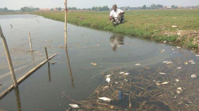 Lumpur Lapindo Bocor, Banyak Ikan di Saluran Irigasi Mati Mengambang