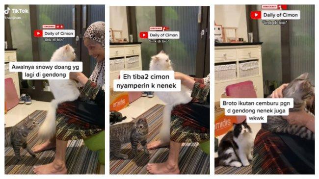 VIRAL Bak Manusia, Kucing-Kucing Ini Cemburu Tak Dapat Kasih Sayang Nenek, Minta Gendong dan Dielus