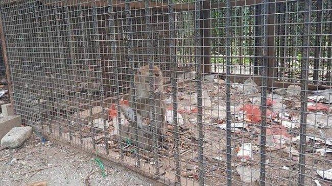 Viral di Karawang, Monyet di Mini Zoo Lapangan Karangpawitan 2 Tinggal di Kandang Penuh Sampah