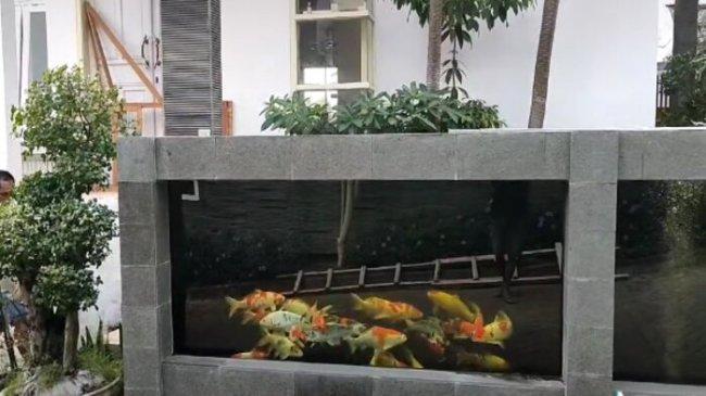 Kisah Pria di Malang Buat Pagar Rumah dari Kolam Ikan Koi, Berawal dari Hobi hingga Videonya Viral