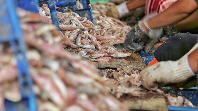Perolehan PNBP-SDA Perikanan Tangkap Tembus Rp 407,4 Miliar, KKP: Akan Kembali Lagi ke Nelayan