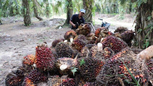 Ke Belanda, Menlu Retno Singgung Soal Keadilan bagi Kelapa Sawit Indonesia