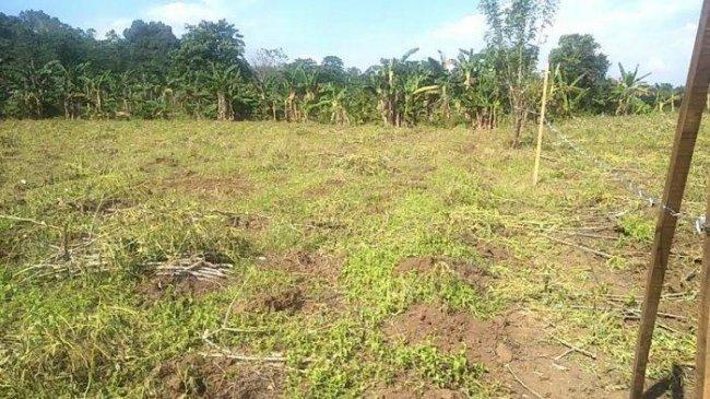 Kasus Kematian Meningkat, Pekuburan Khusus Covid-19 di Macanda Gowa Diperkirakan Penuh Seminggu Lagi