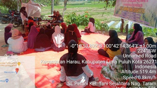 IPDMIP Bantu Petani Jorong Gantiang Nagari Taram Sumbar