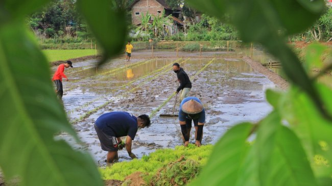 CELIOS: KUR Bisa Bantu Sektor Pertanian dari Hulu Hingga Hilir