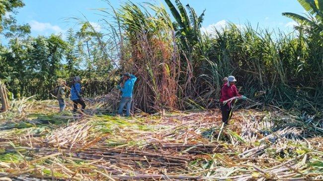 PTPN Ingin Wujudkan Kemandirian Gula Nasional pada 2024, Kemitraan dengan Petani Jadi Poin Penting