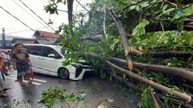 Pengendara Motor di Sidoarjo Tewas Tertimpa Pohon Tumbang, 4 Lainnya Terluka