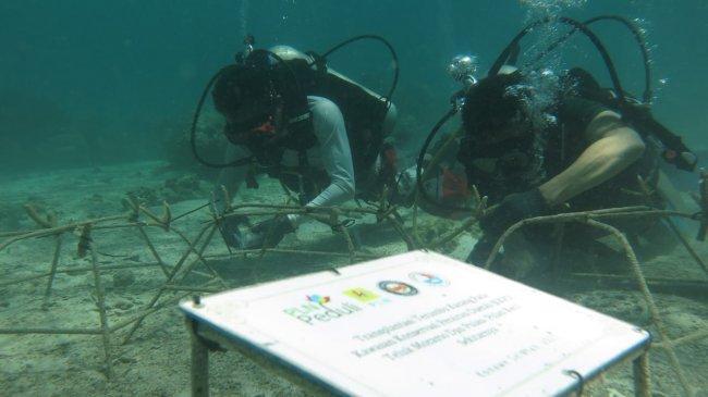 Lestarikan lingkungan, PLN Lakukan Transplantasi Terumbu Karang di Konawe Selatan Sultra