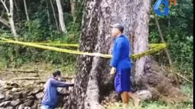 Perusakan Pohon Resan Berusia Ratusan Tahun di Gunungkidul Picu Emosi Warga, Polisi Turun Tangan