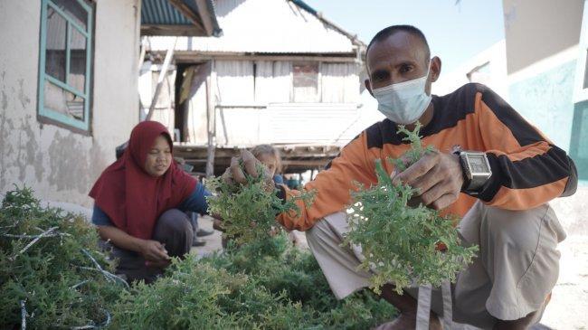 Tingkatkan Pertumbuhan Ekonomi, KKP Komitmen Genjot Produksi Rumput Laut