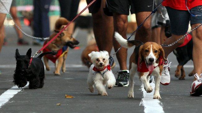 Korea Selatan Wacanakan Pelarangan Konsumsi Daging Anjing