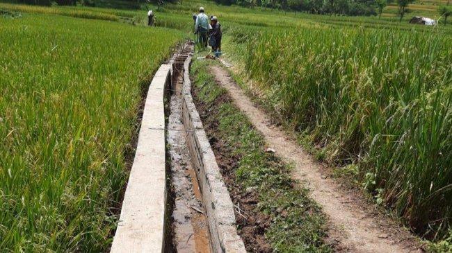 Petani Jombang Rasakan Manfaat RJIT, Produktivitas Hasil Panen Makin Melimpah