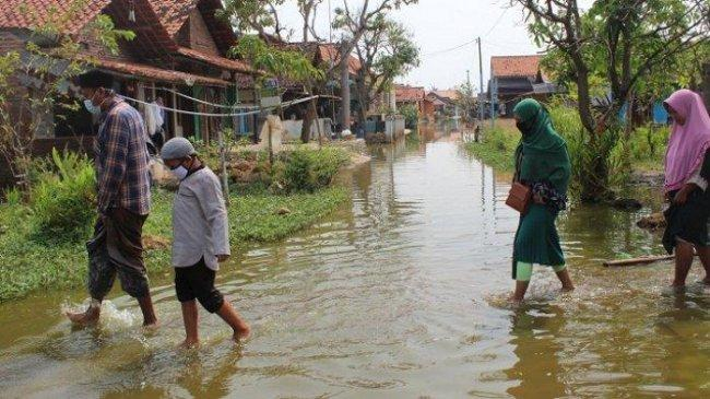 Semarang, Demak, Pekalongan Bakal Tenggelam. Sawah Jadi Laut