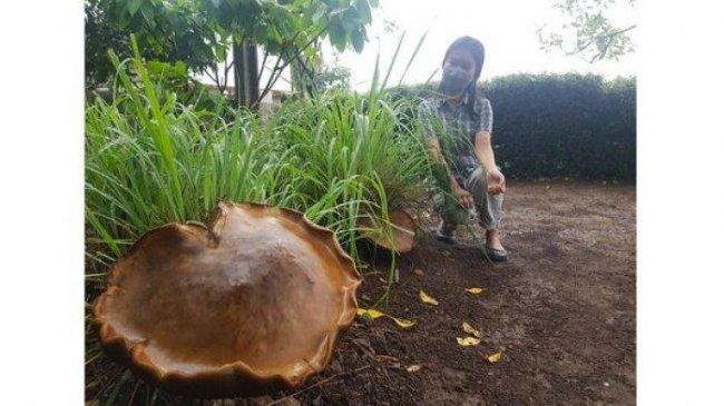 Temuan Bunga Bangkai Suwek di Pamulang dan Jamur Raksasa di Bandung Buat Heboh Warga