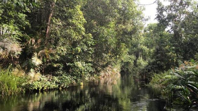 Menelusuri Sungai Hitam di Tengah Hutan Kalimantan