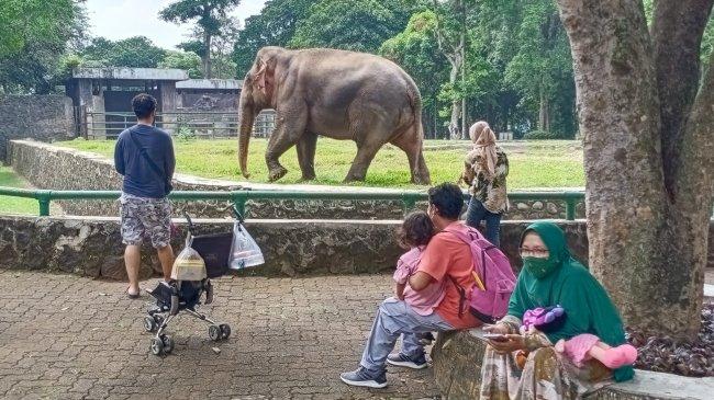 Warga Ber-KTP Non DKI Jakarta Tak Diizinkan Berekreasi di Kebun Binatang Ragunan Selama PPKM Level 2