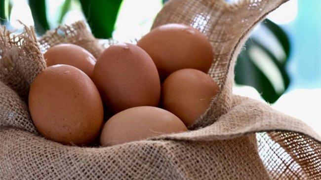Harga Telur Ayam Terus Anjlok, Peternak : Kalau Gini Terus Bisa Gulung Tikar